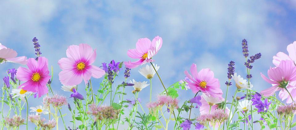 Se soigner grâce aux plantes