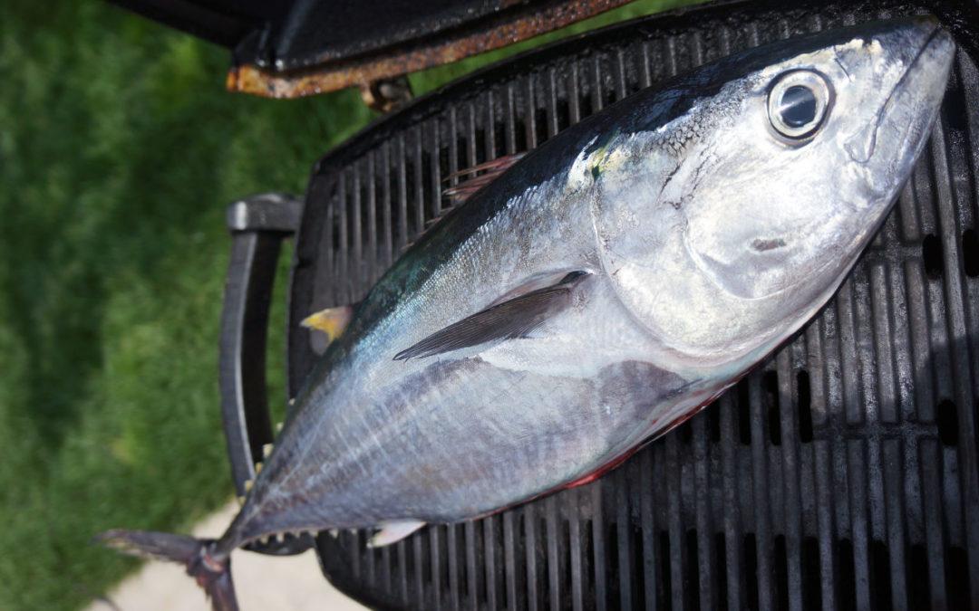 Liste des poissons les moins pollués
